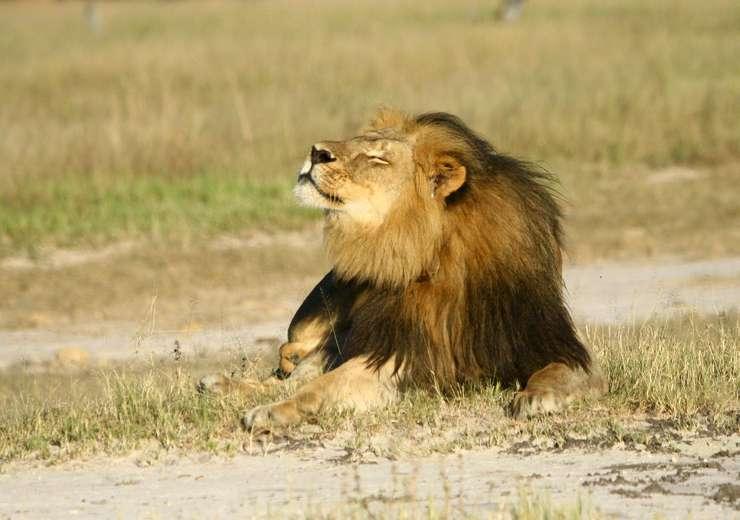 Leul Cecil (Foto: Reuters/A.J. Loveridge)