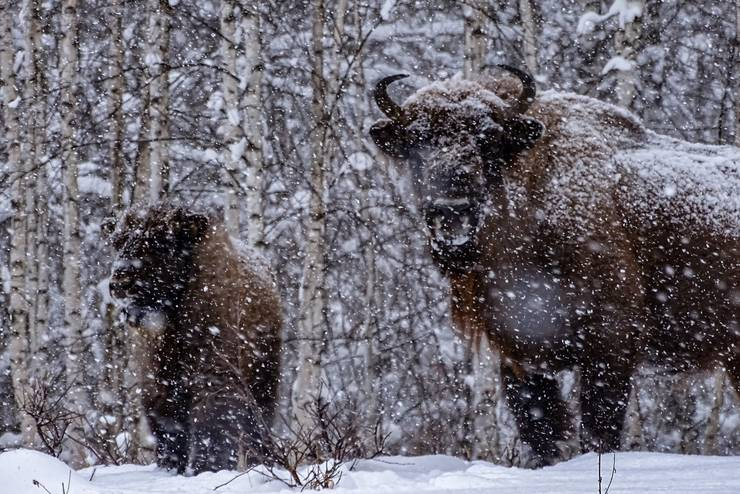 Sursa foto: Facebook/WWF-România