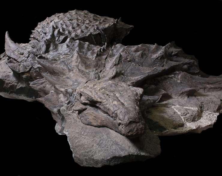 Dinozaurul Borealopelta markmitchelli, extrem de bine conservat (Foto: Royal Tyrrell Museum of Paleontology)