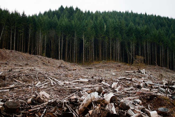 Exploatare forestieră în pădurile României
