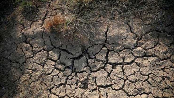 O imagine care ilustreazà schimbàrile climatice. Fotografie fàcutà pe 7 august 2018 în pàdurea Asel din Germania.