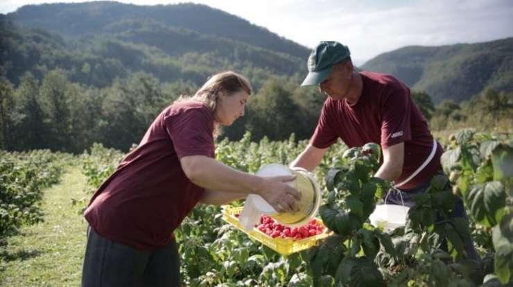 Peste 1,5 milioane de români lucrează în străinătate în sectorul agricol