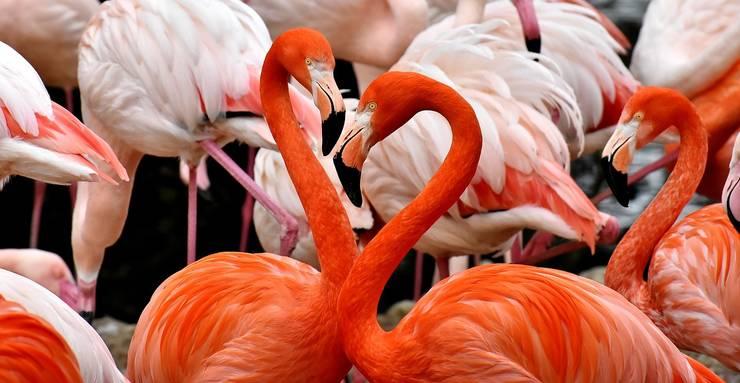 Păsările flamingo au revenit anul acesta în România (Sursa foto: pixabay-ilustrație)