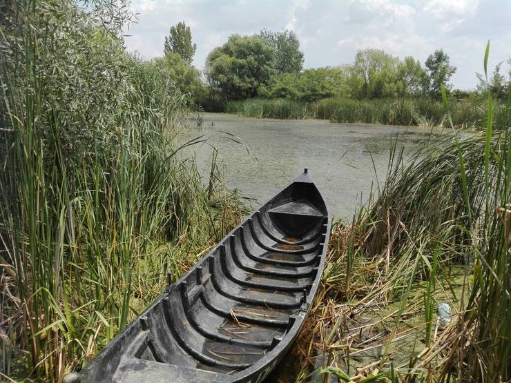 Imagine din Parcul Natural Văcăreşti (Foto: RFI/Cosmin Ruscior)