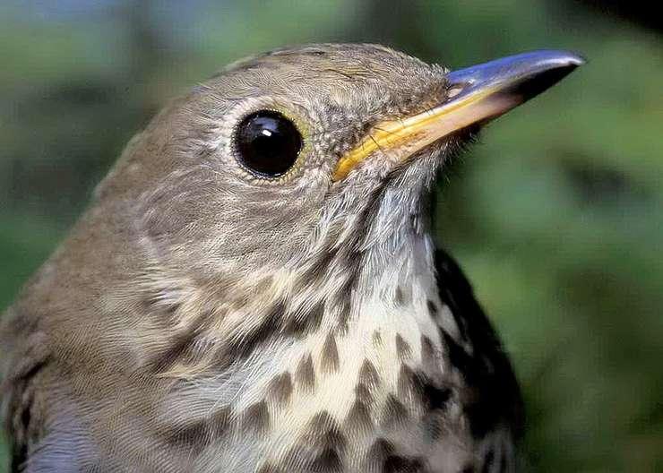 Vremea din ultima perioadă a afectat sute de păsări (Sursa foto: pixabay)