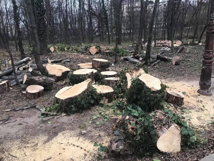 Un nou atac de tip mafiot se produce într-o pădure din Suceava. Doi regizori si activistul de mediu Tiberiu Bosutar au fost batuti cu cruzime