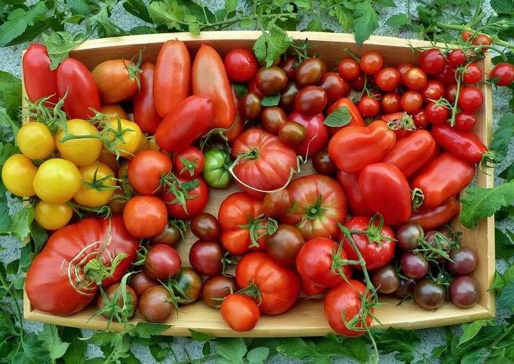 """Costel Vînătoru deține o """"colecție"""" de peste 1.500 de soiuri de tomate"""
