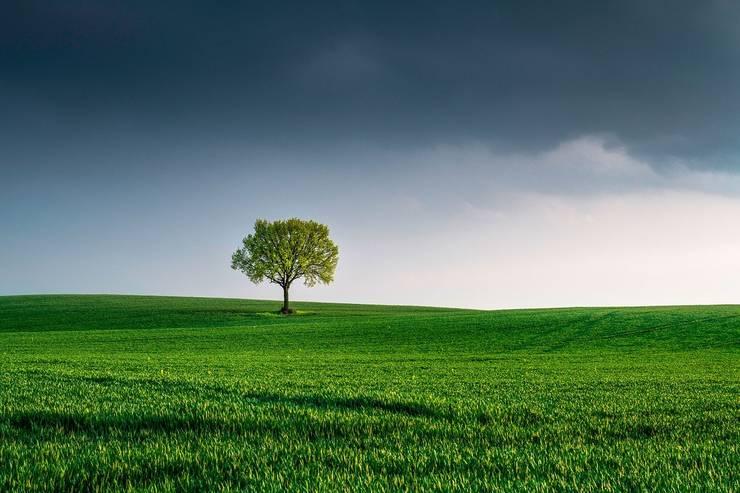 Ziua Pământului, marcată pe 22 aprilie (Sursa foto: pixabay)