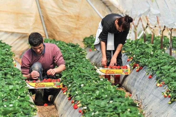 Muncitori sezonieri în agricultură