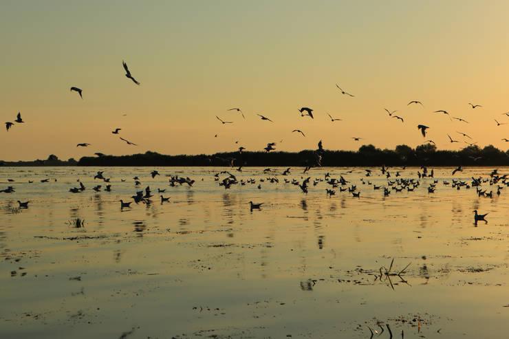30 de grupuri de bază pentru păsări