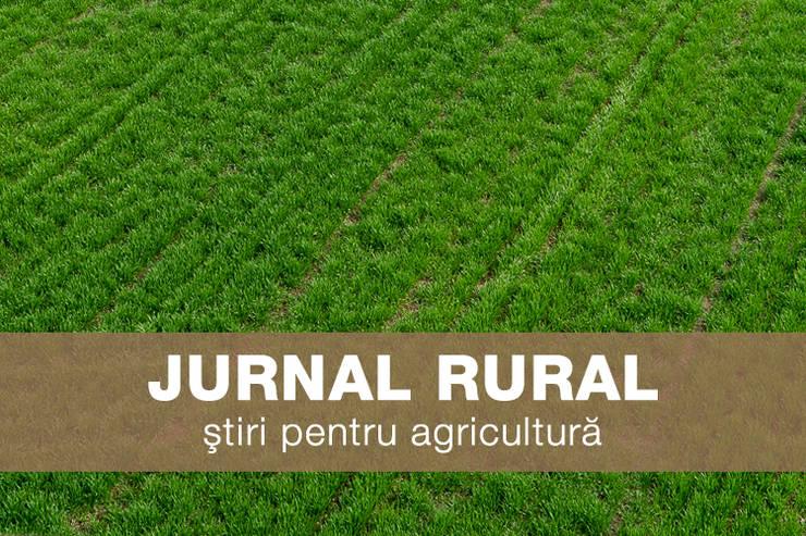 Jurnal rural - lan cu grau primavara