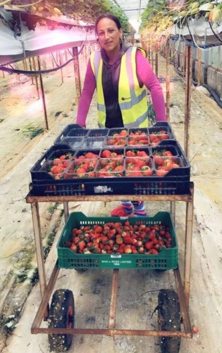 Marinela - muncitoare sezonier agricol în Anglia