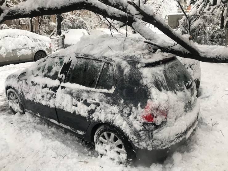 Copac căzut peste o mașină, Drumul Taberei, 6 februarie 2020