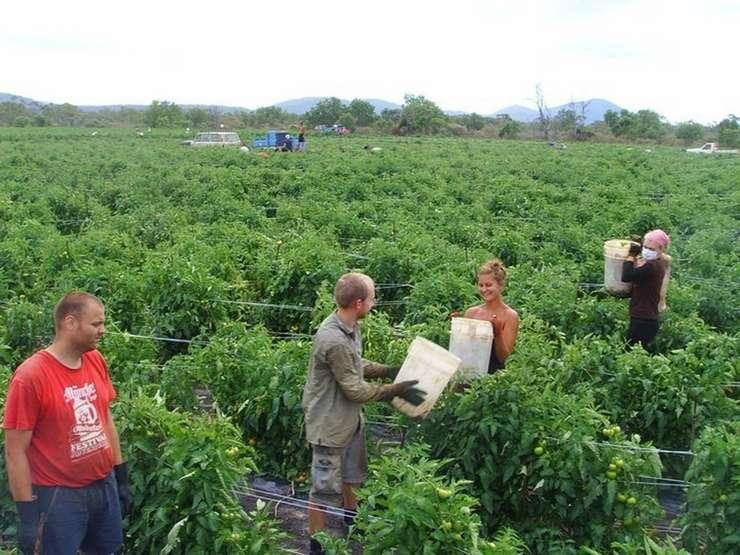 Agricultura ar avea de suferit dacă nu ar mai putea recruta lucrători străini