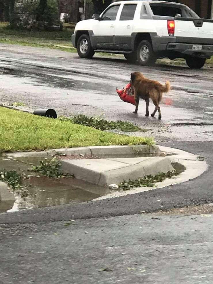 Câinele Otis şi punga lui cu mâncare (Sursa foto: Facebook/Tiele Dockens)
