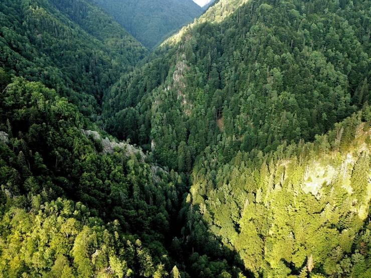 Pădurea virgină Boia Mică (Sursa foto: Agent Green)