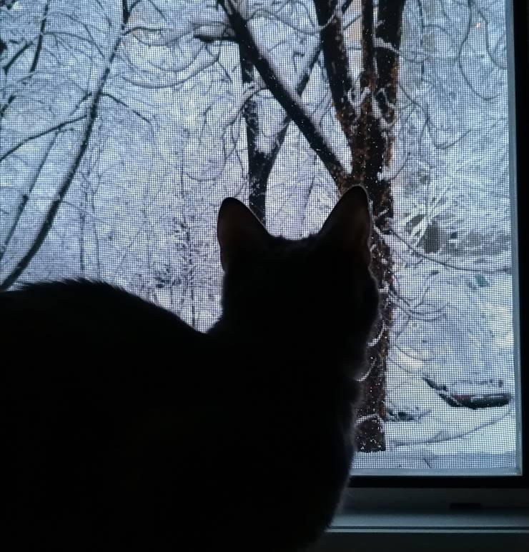 Pisică... surprinsă de venirea iernii (Foto: RFI/Cosmin Ruscior)