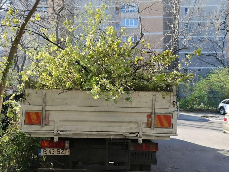 Toaletare de copaci, în Sectorul 6 (Foto: RFI/Cosmin Ruscior)