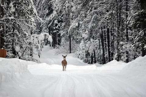 Animalele sălbatice, afectate de ninsori şi ger. Magor Csibi (WWF): Cele mai expuse sunt păsările şi erbivorele