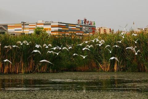 Ecologiştii trag un semnal de alarmă: Delta Văcăreşti are nevoie urgentă de protecţie
