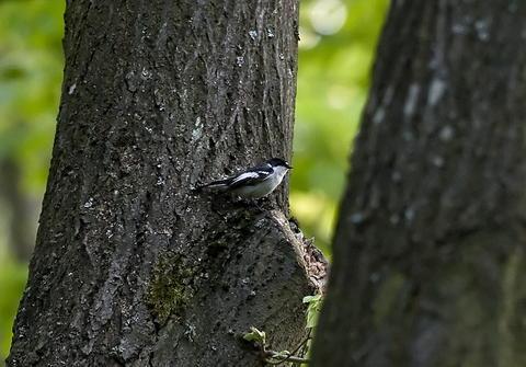 (FOTO) O nouă specie de pasăre, în fauna din România