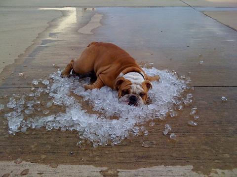 Luna iulie, cea mai fierbinte din istorie. Expertă la RFI: Consecinţele ar putea fi de neimaginat