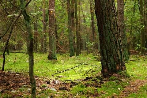 Ministrul Mediului, bilanţ la RFI: Am introdus 100 de noi sancţiuni în domeniul silvic