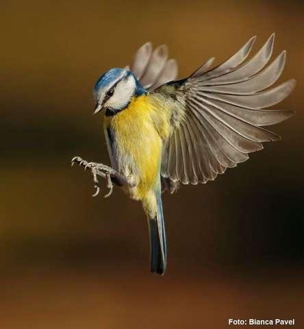 Păsări în pericol, din cauza frigului. Cum să le hrănim corect?