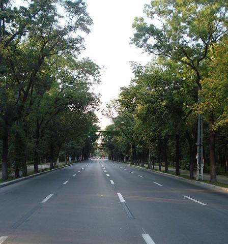Scandalul copacilor tăiaţi pe Kiseleff. ONG: Primarii îşi fac campanie pe spaţii verzi, dar lucrurile se schimbă imediat după ce sunt aleşi