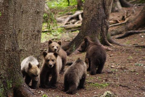 Rapoartele complete privind uciderea ursului de la Sibiu, așteptate luni