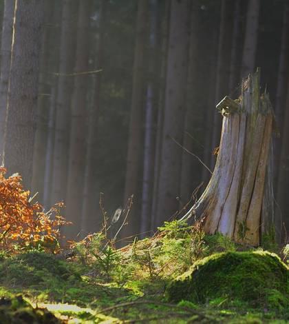 Ce soartă va avea aplicaţia Inspectorul Pădurii? (Sursa foto: pixabay.com)