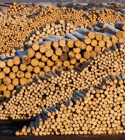 Holzindustrie Schweighofer este o companie austriacă de procesare a lemnului