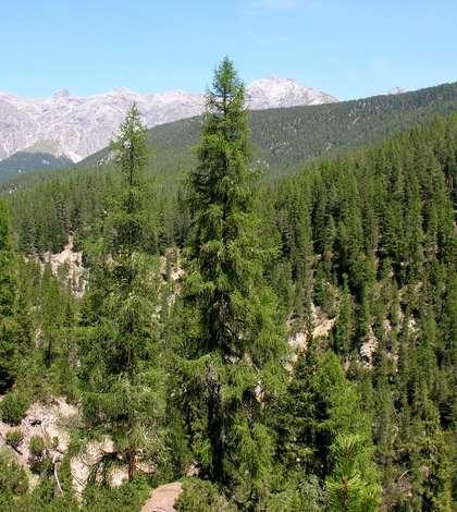 România are 478.000 de hectare de pădure care nu se află în administrarea nici unui ocol silvic