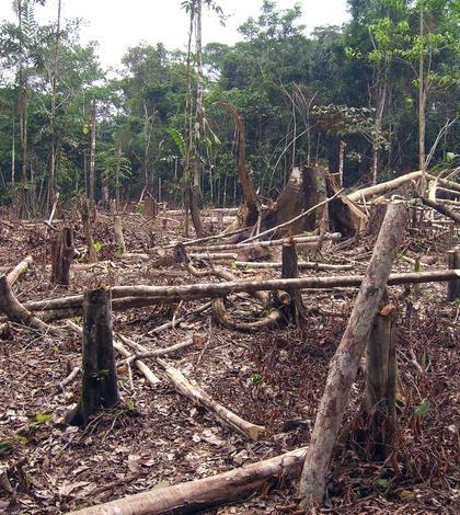 Defrişări de păduri